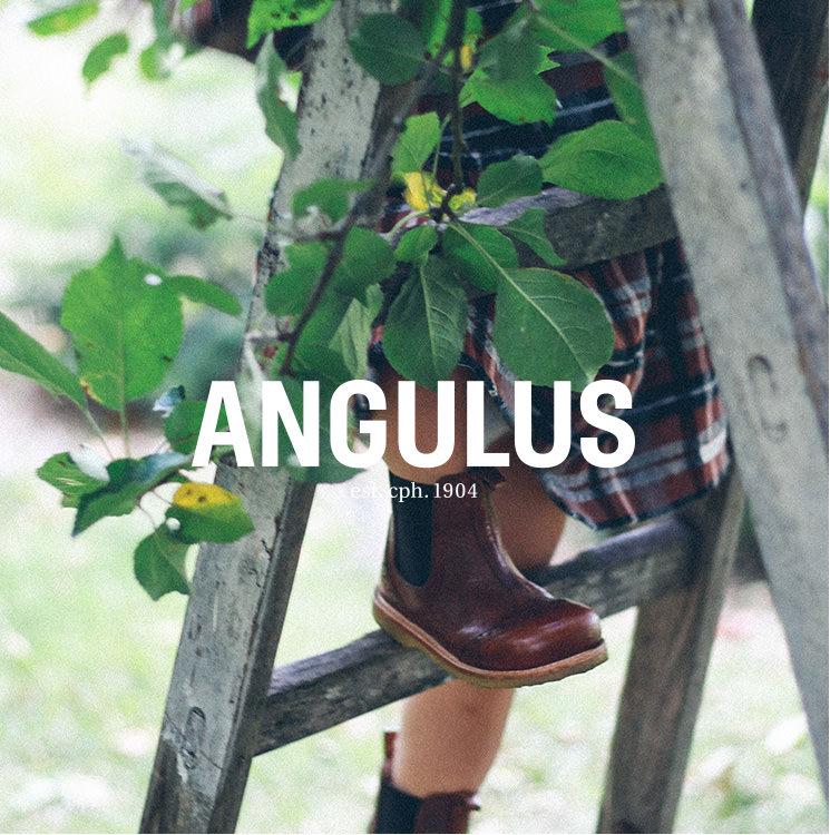 W41_k_4c_Angulus