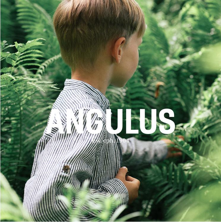 W5_k_4b_angulus